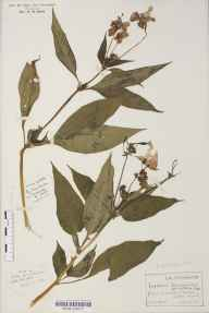 example herbarium sheet
